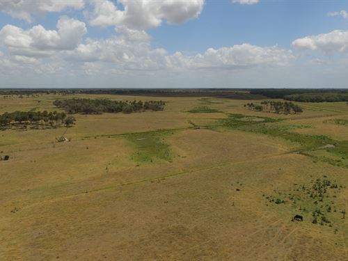 500+/- Acre Ranch For Sale : Okeechobee County : Florida