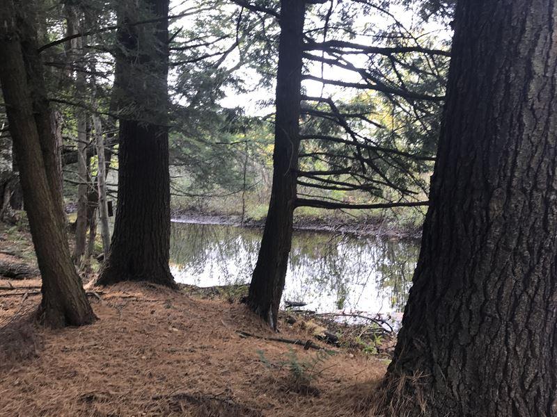 Sandy Pine Ridge Forest : Williamstown : Oswego County : New York