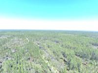 60 Acres For Hunting : Mayo : Taylor County : Florida