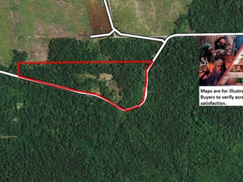 13.5 Ac Wooded Tract For Rural Hom : Buna : Newton County : Texas