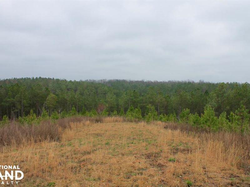 Hackleburg Tract : Hackleburg : Marion County : Alabama