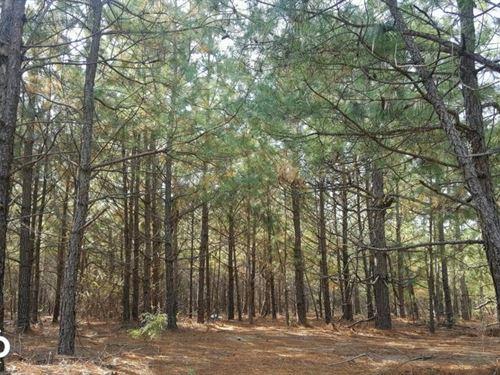 Raeford Secluded Homesite : Raeford : Hoke County : North Carolina