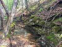 Trafford Hunting And Recreation Tra : Trafford : Blount County : Alabama