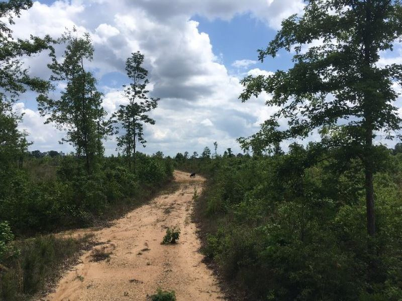 100 Acres Of Gentle Rolling Land Wa : Tylertown : Walthall County : Mississippi