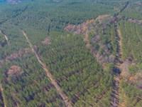 300 Acres In Fairfield County : Blair : Fairfield County : South Carolina