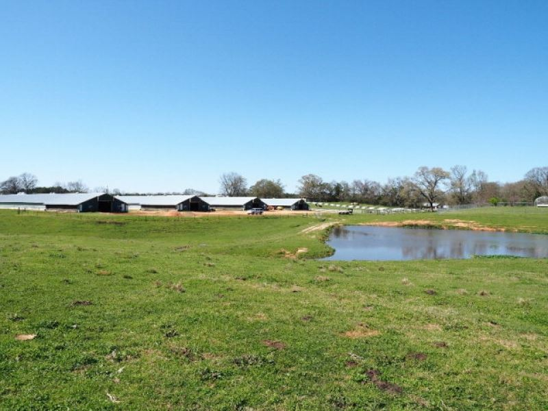 4 House Poultry Farm With Residence : Laurel : Jones County : Mississippi
