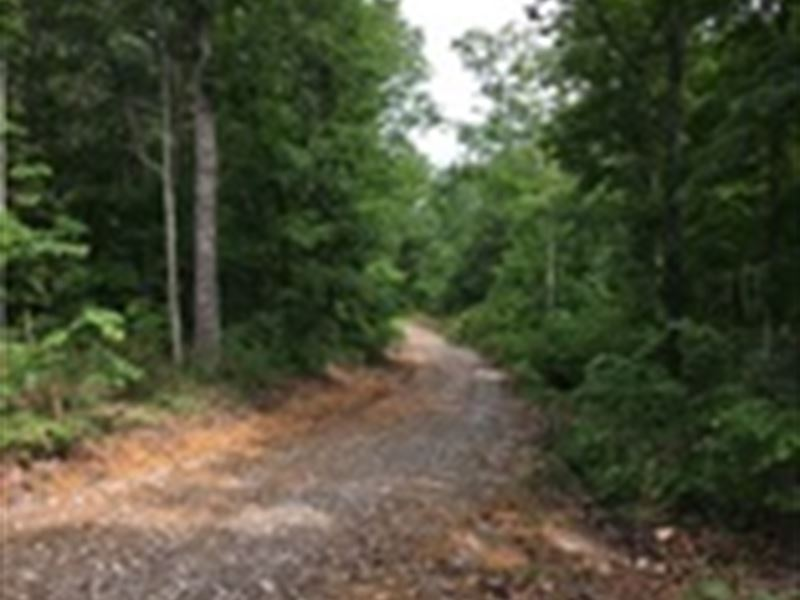 21 Wooded Acres In Adair County, Ky : Columbia : Adair County : Kentucky