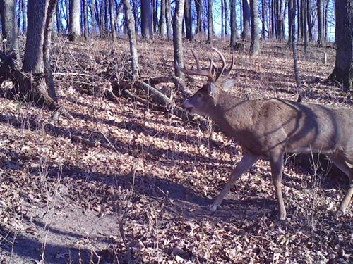 Once In A Lifetime Hunting Property : Viola : Richland County : Wisconsin