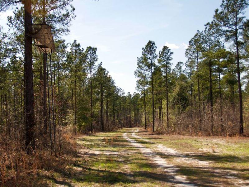Riverbluff Tract : Waynesboro : Burke County : Georgia