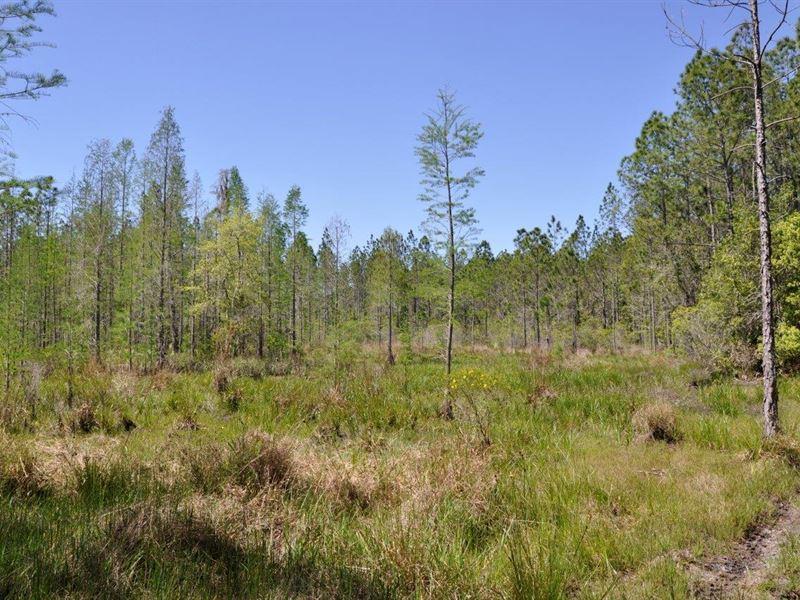 Deen Still Road Recretaional Tract : Davenport : Polk County : Florida