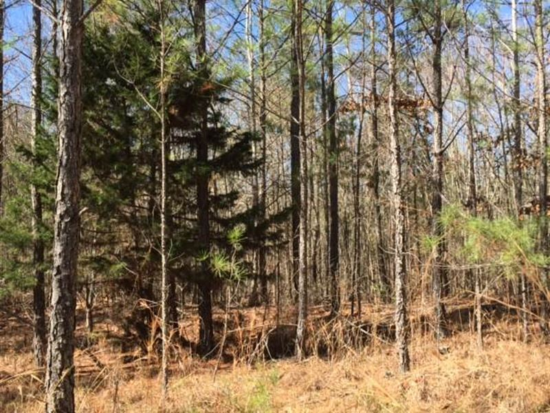 69 Acres Ranch For Sale Ackerman Choctaw County