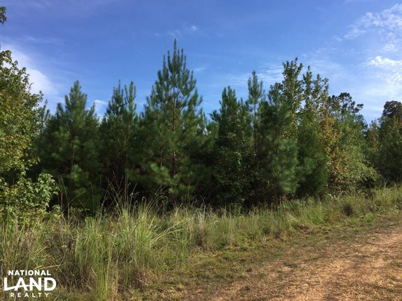 Jackson Bridlepath Road Timber & Hu : Jackson : Clarke County : Alabama