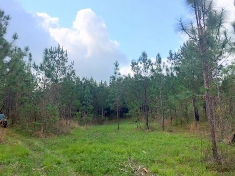 46 Acres Great Hunting Tract : Kokomo : Marion County : Mississippi