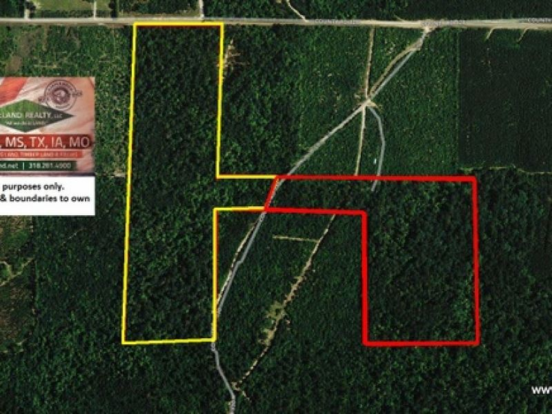 52 Ac Timberland With Home Site Po : Jasper : Jasper County : Texas