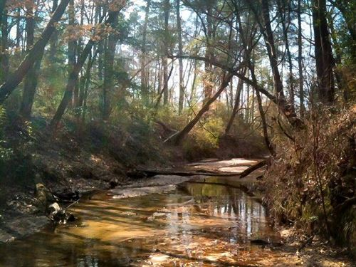 1,291 Acres Cr 3400 : Colmesneil : Tyler County : Texas