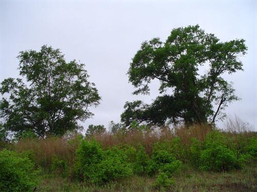 Latta Tract : Latta : Dillon County : South Carolina