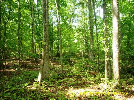 108 Acres -valuable Timberland : Heflin : Cleburne County : Alabama
