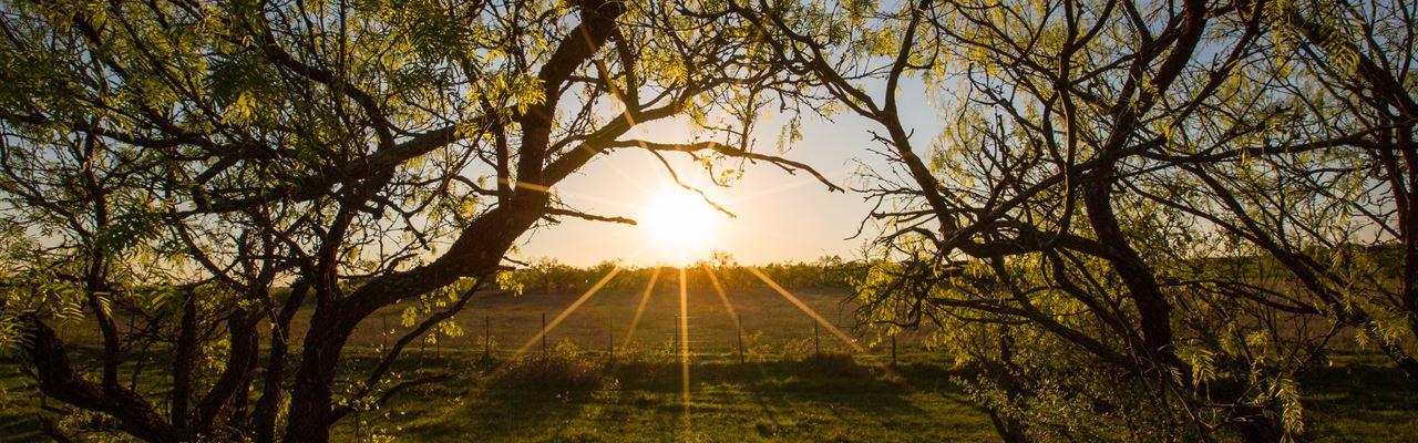 Ranch - In Texas, Near Heaven