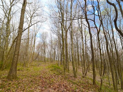 Amerine Rd - 49 Acres : South Bloomingville : Hocking County : Ohio