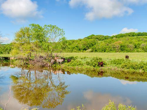 285 Acre Cattle Farm : Culleoka : Maury County : Tennessee