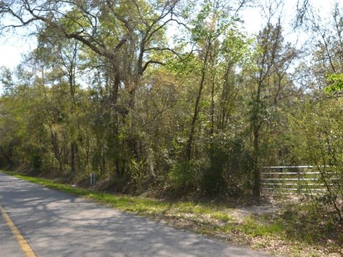 Wester Road 89 Acres : Lake City : Columbia County : Florida