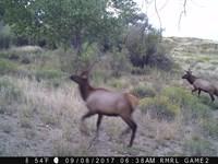 Premimum Hunting & Cattle Ranch : Walsenburg : Huerfano County : Colorado