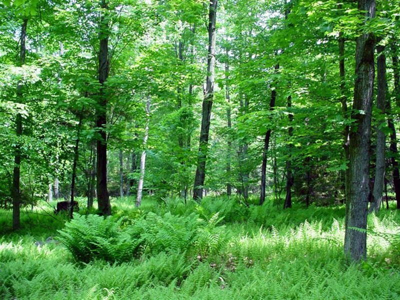 Grafton Recreational Forest : Grafton : Rensselaer County : New York