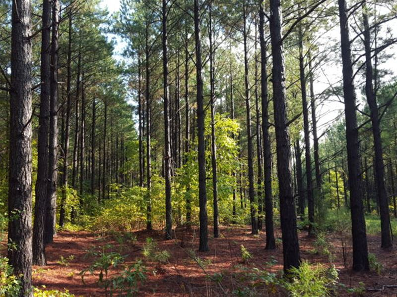 108 Ac Timberland Investment Tract : Jonesville : Union County : South Carolina