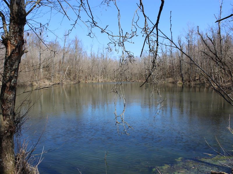 Sulpher Springs Rd - 80 Acres : New Lexington : Perry County : Ohio