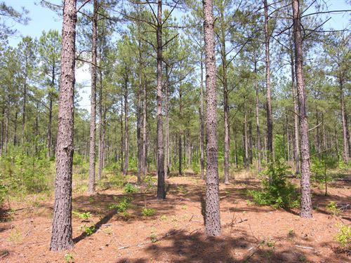 71.16 Acres Older Pine Trees : Mitchell : Warren County : Georgia