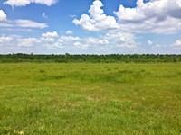Reduced Hunting Hayfield & Creek : Pavo : Thomas County : Georgia