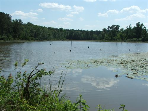 Hillis Farm, Cropland - Large Lake : Sardis : Burke County : Georgia