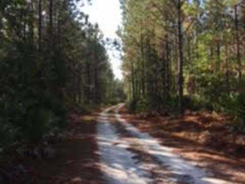 60Ac Timberland, Hunting, Homestead : Hortense : Wayne County : Georgia
