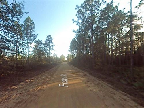 40 Acres In Fountain, FL : Fountain : Bay County : Florida