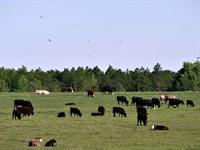 Cedar Grove Farm : Dublin : Laurens County : Georgia
