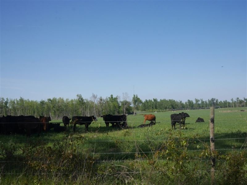 Pepperidge Farm : Vidette : Burke County : Georgia