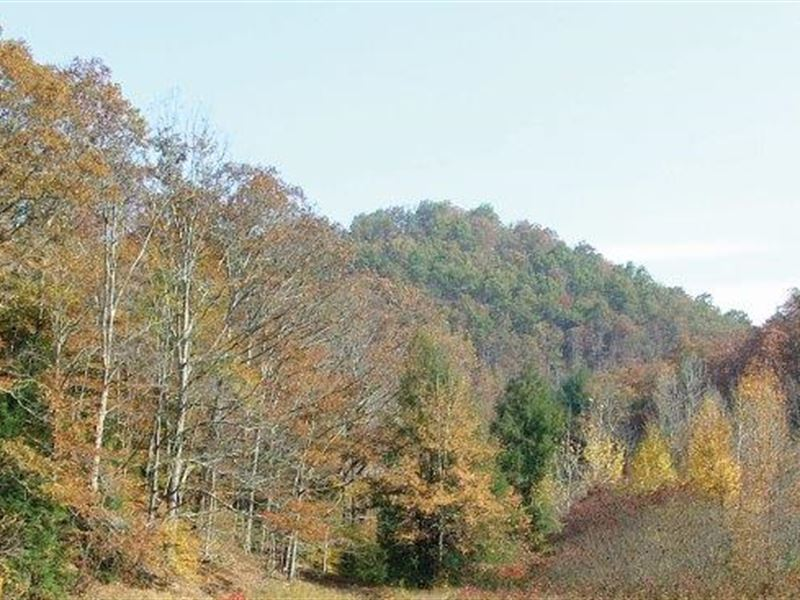 Auction West Virginia Hardwoods : Bickmore : Clay County : West Virginia