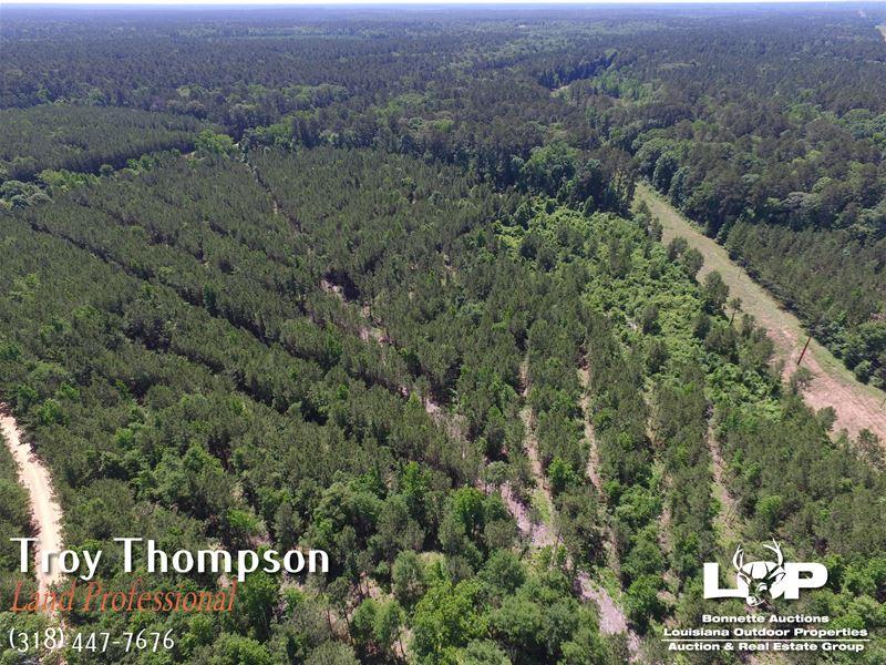 117 Acres In Grant Parish : Pollock : Grant Parish : Louisiana