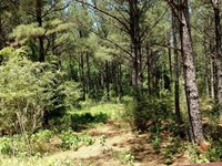 Excellent Timber Hunting Tract : Tignall : Wilkes County : Georgia