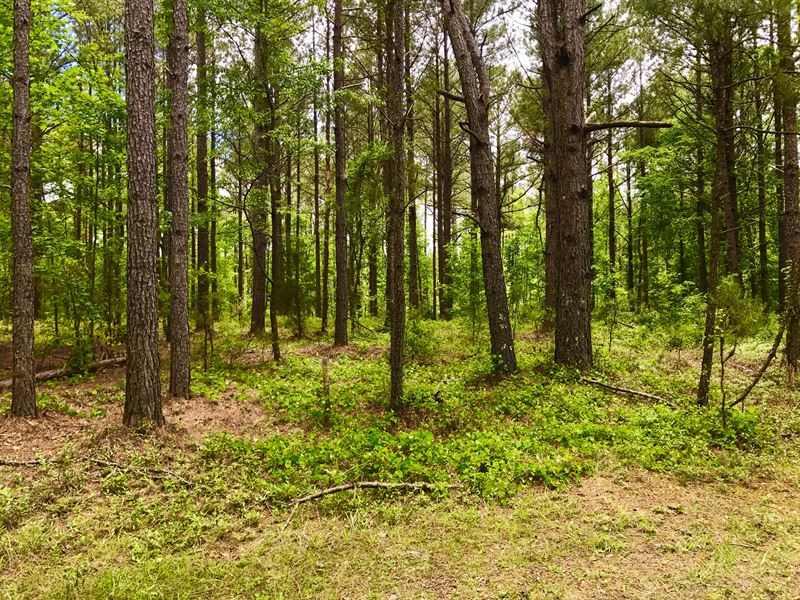 278 Acres In Lee County, Sc : Rembert : Lee County : South Carolina