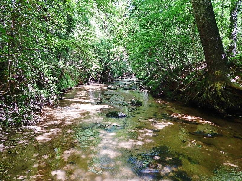 Open Land, Bold Creek : Comer : Madison County : Georgia