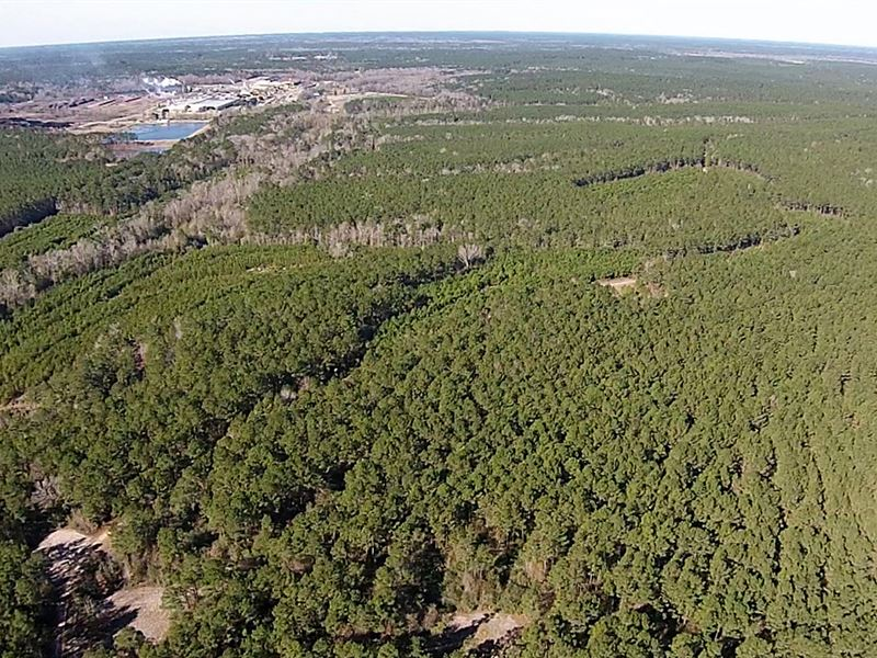 24 Acres Fm 942 : Camden : Walker County : Texas