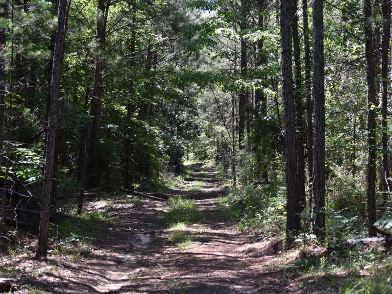 South Mississippi Hardwood Hunting : McNair : Franklin County : Mississippi