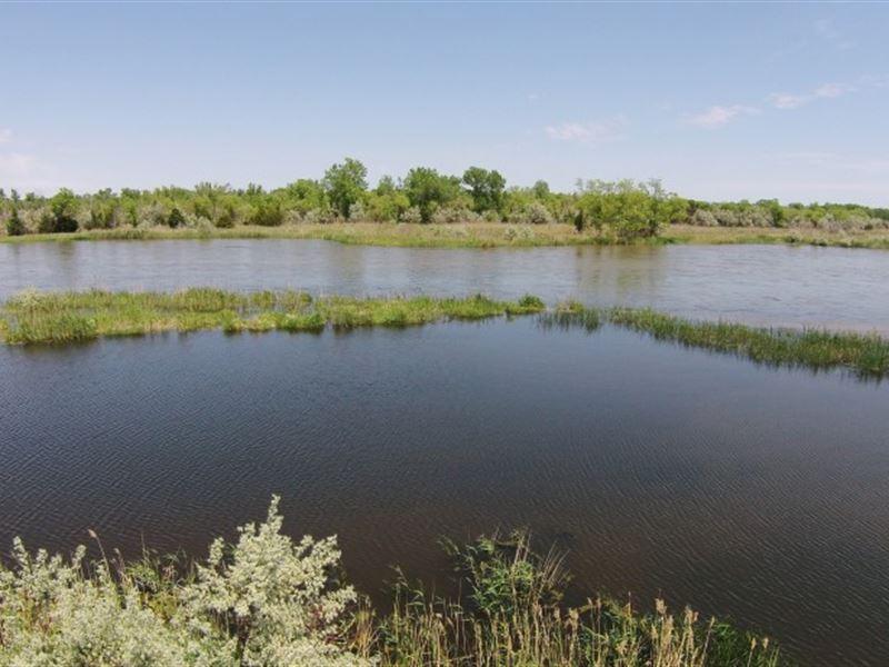 Platte River Wildlife : North Platte : Lincoln County : Nebraska