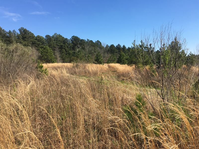 Timberland / Development Potential : East Dublin : Laurens County : Georgia