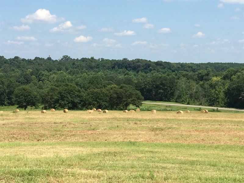 10 Acres With Scattered Oaks : Troy : Pike County : Alabama