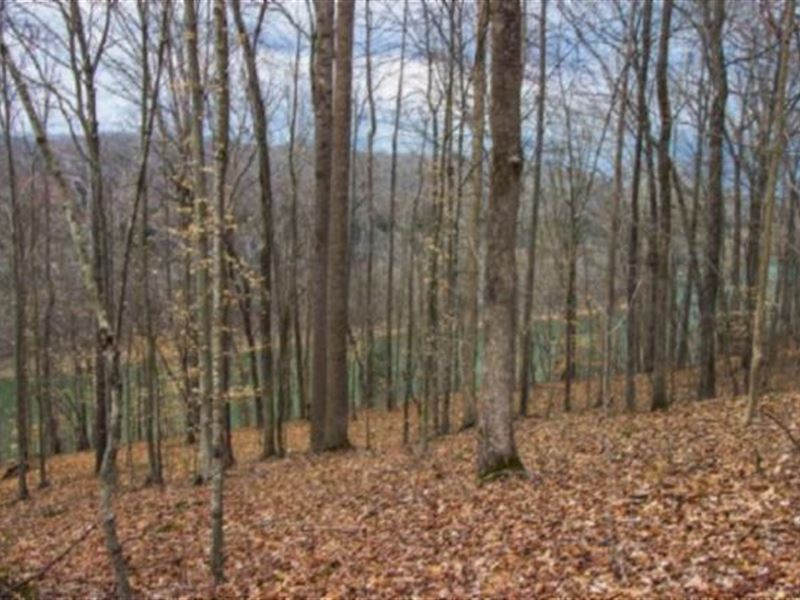 63.81 Acres Lake View In Dekalb Co : Smithville : Dekalb County : Tennessee