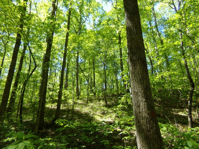 Beautiful Farm With Creeks & Timber : Hohenwald : Lewis County : Tennessee
