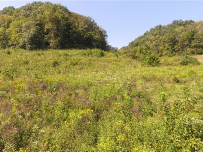 72.68 Acres Wooded In Jackson Co : Whitleyville : Jackson County : Tennessee
