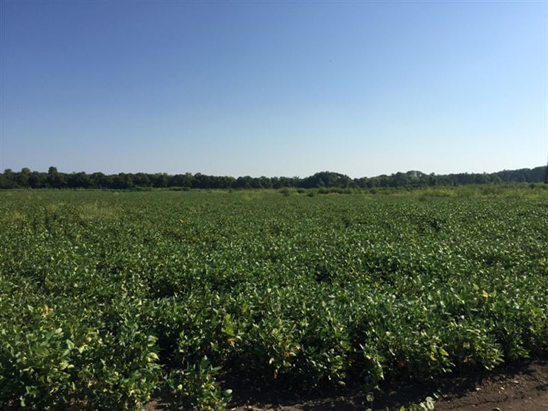 Land For Sale In Artesia, Ms : Artesia : Lowndes County : Mississippi